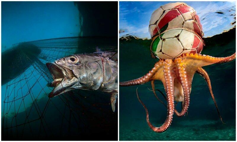 Полное погружение: лучшие фотографии подводного мира 2020 (27фото)
