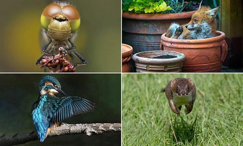 Победители конкурса фотографий дикой природы Essex Wildlife (13фото)