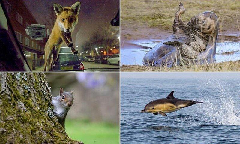 Победители конкурса любительской фотографии Mammal Photographer of the Year (16фото)
