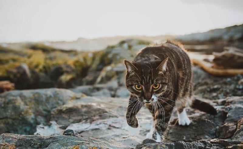 Хозяйка заказала для кота профессиональную фотосессию - и не жалеет (18фото)