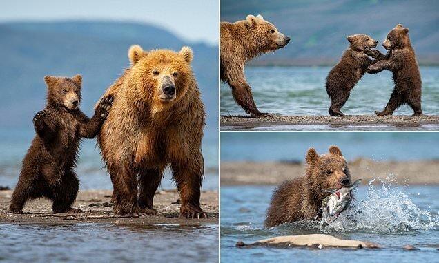 Медвежата учатся ловить рыбу на Курильском озере (11фото)