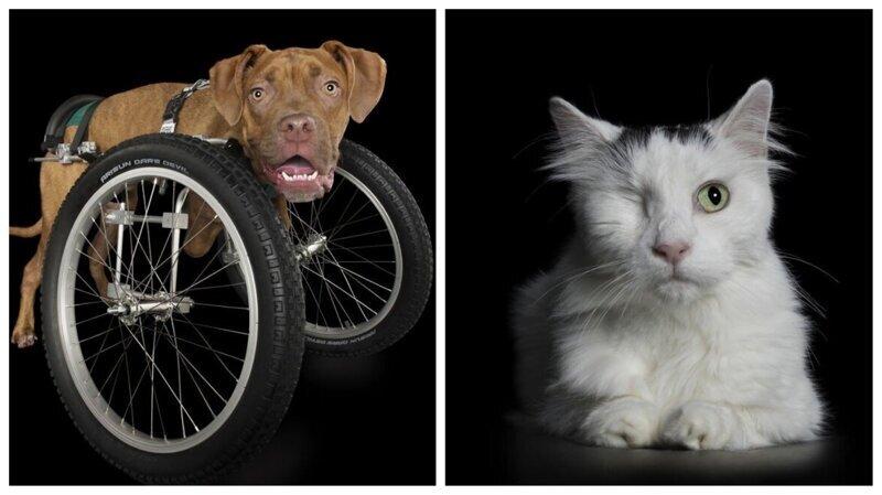 Потрясающие портреты животных с ограниченными возможностями (14фото)