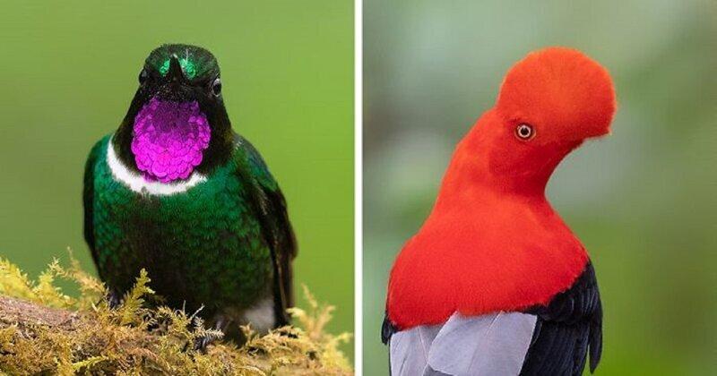 Звери и птицы, которых вы никогда не видели! (32фото)