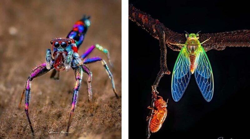 Красочные пауки и другие милые твари от индийского фотографа (72фото)