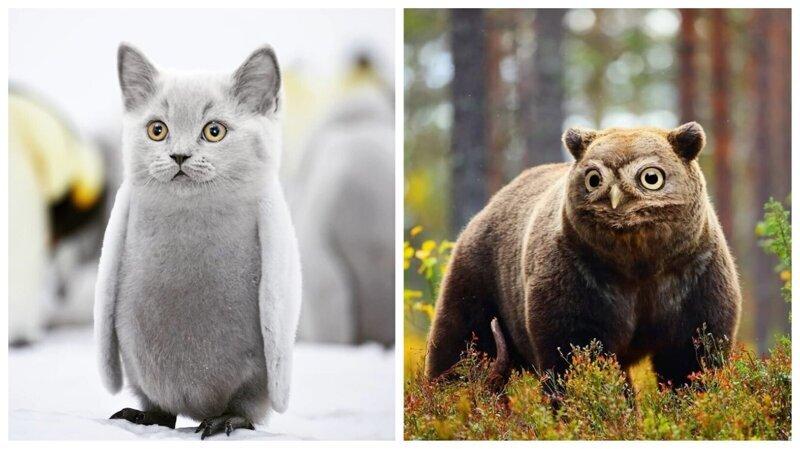 Художник рисует самые дурацкие гибриды животных, какие только может придумать (26фото)
