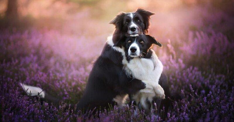 Собаки как люди: трогательные портреты друзей человека (31фото)