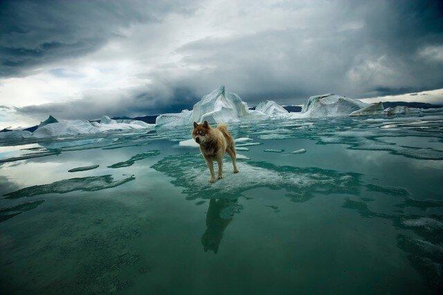 Арктика: исчезающий Север (9фото)