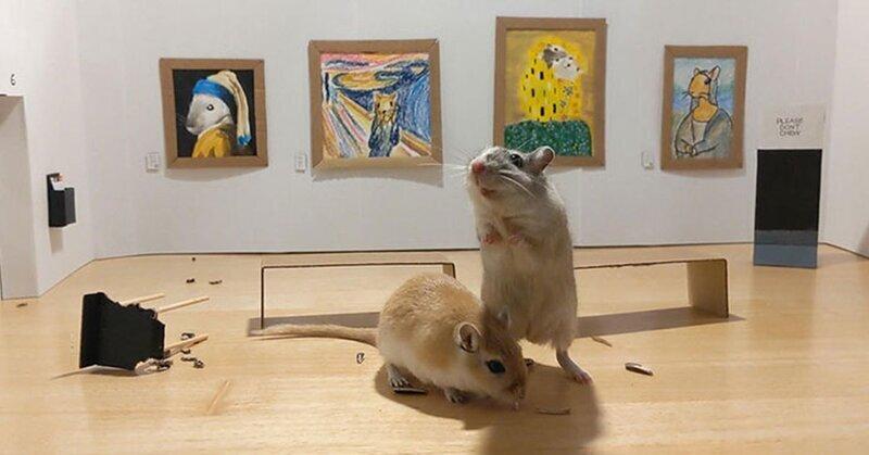 Пара на карантине построила художественную галерею для своих домашних питомцев (14фото)