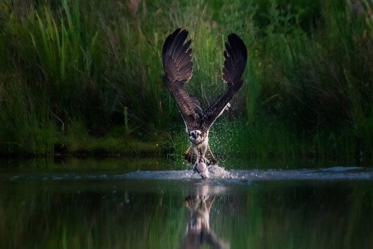 Лучшие фотографии из национальных парков и заповедников (11фото)