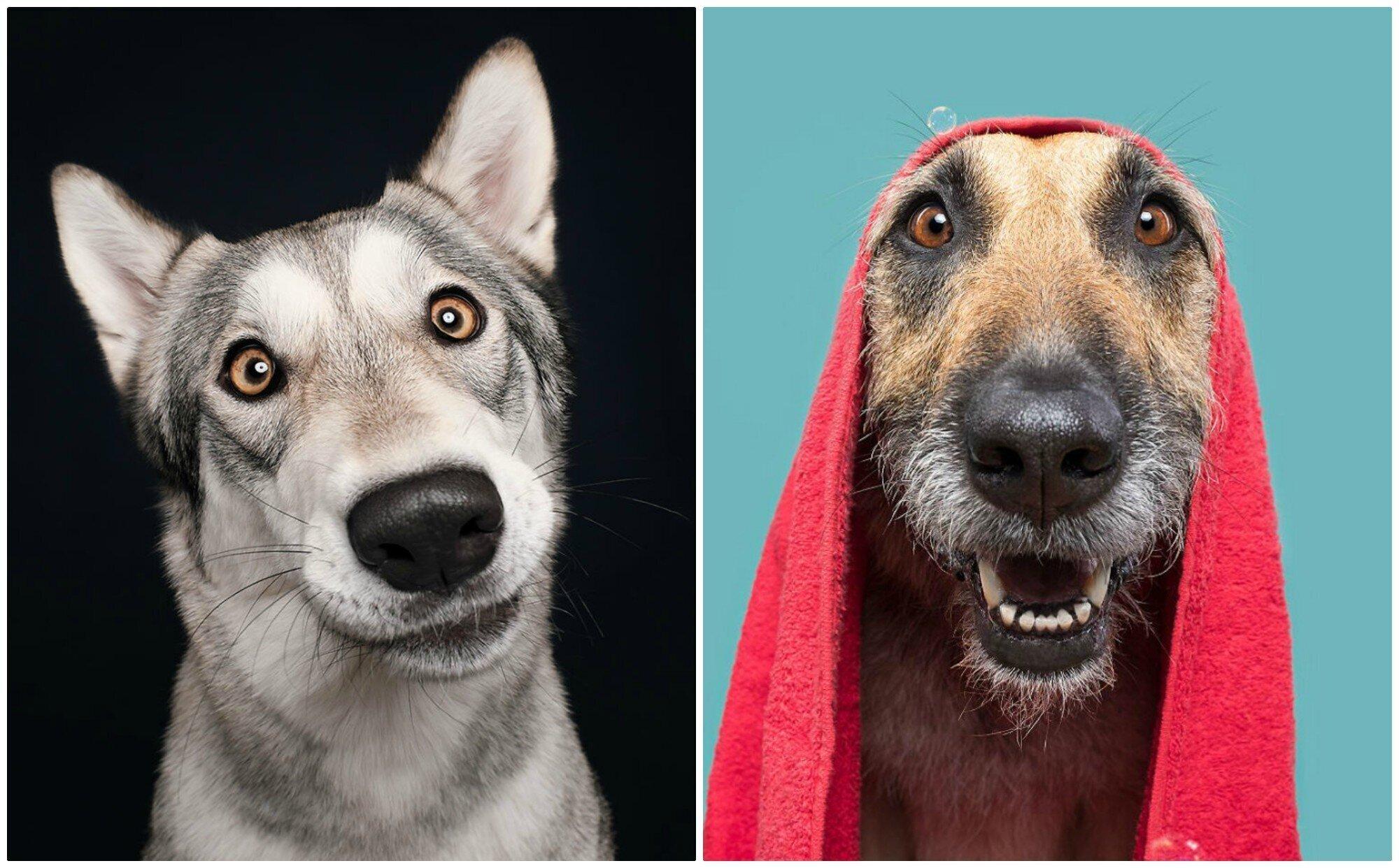 Сплошные эмоции! Забавные портреты собак самых разных пород (21фото)