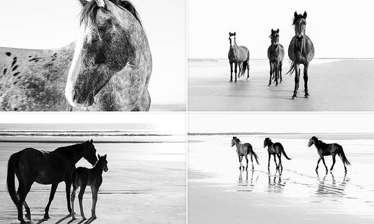 Волшебные фотографии лошадей, которые живут на острове Камберленд (15фото)