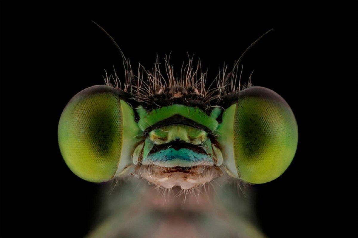 Фотограф заглянул в глаза летающим монстрам (20фото)