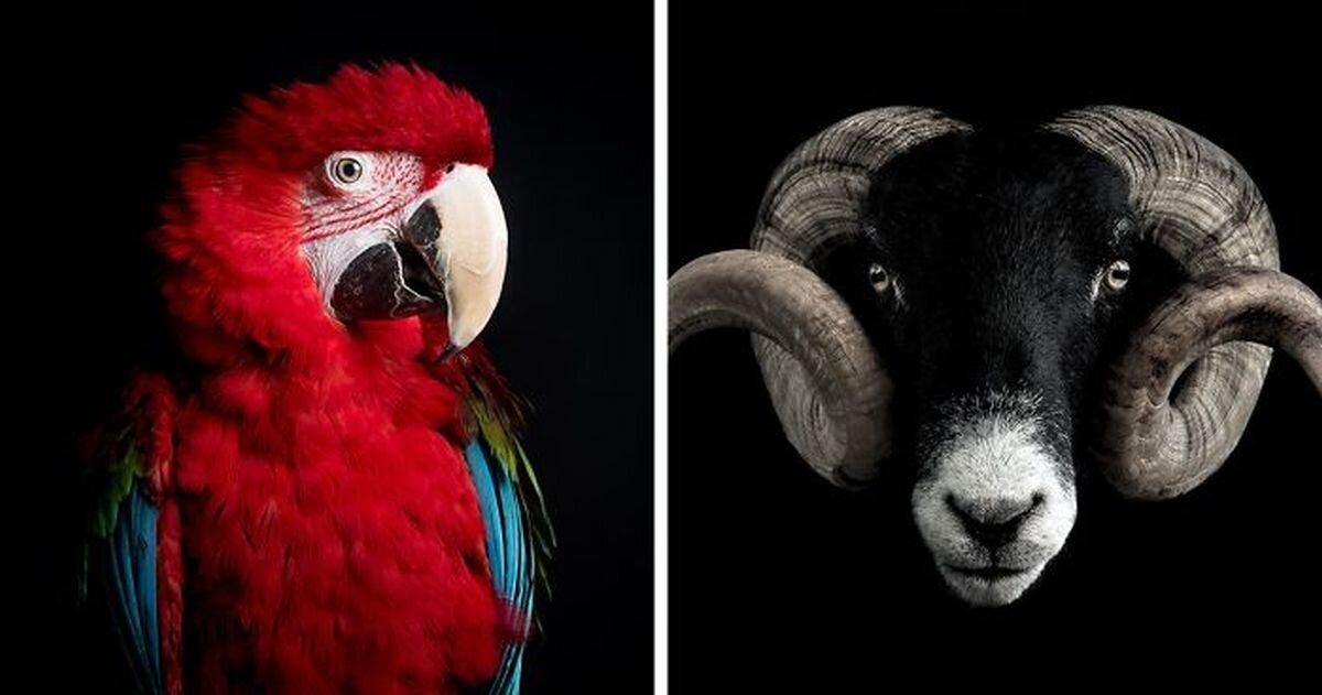 18 минималистичных портретов животных (19фото)