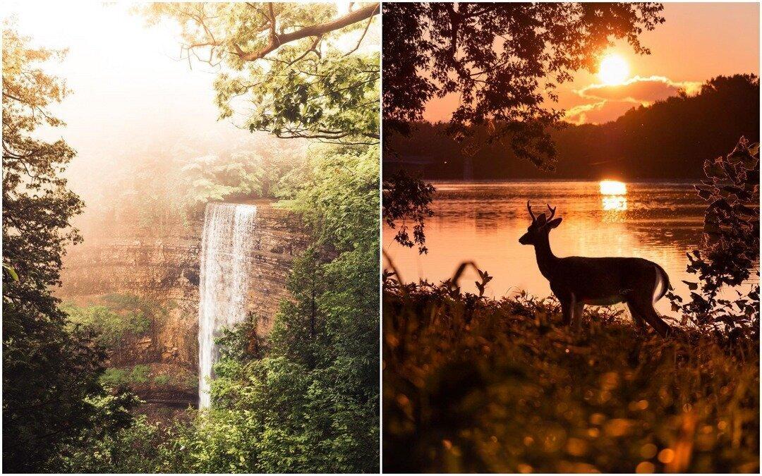 Природа и животные на снимках Логана Брауна (26фото)