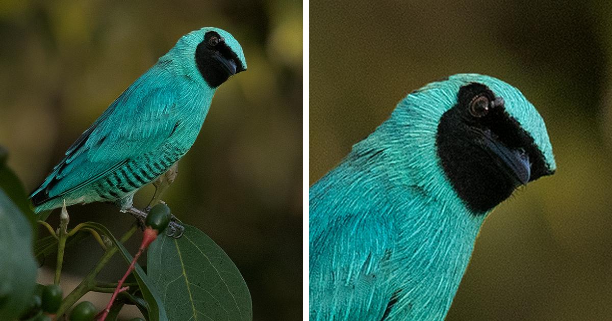 Невероятные птицы Перу (32фото)