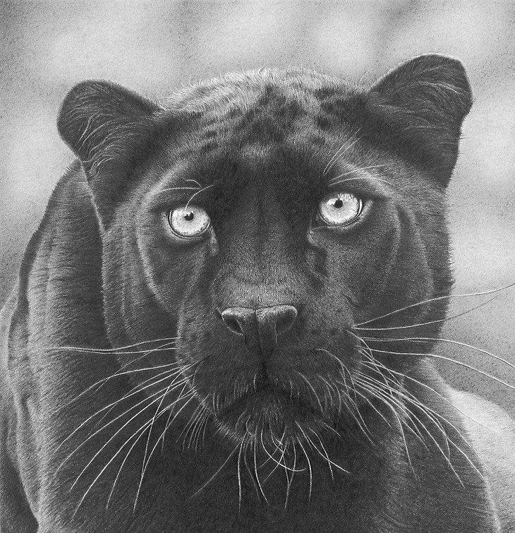 Грация и красота животных в графите (35фото)