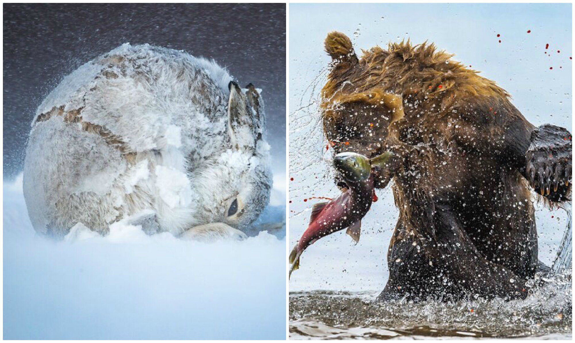 Лучшие фотографии живой природы с конкурса BigPicture Natural World (31фото)