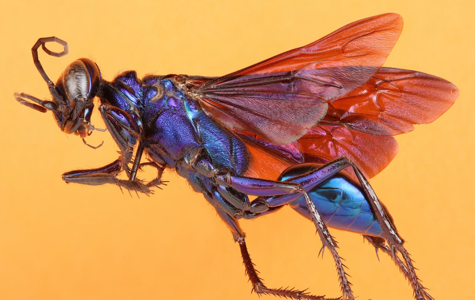 Уникальные снимки насекомых от команды Техасского университета (22фото)