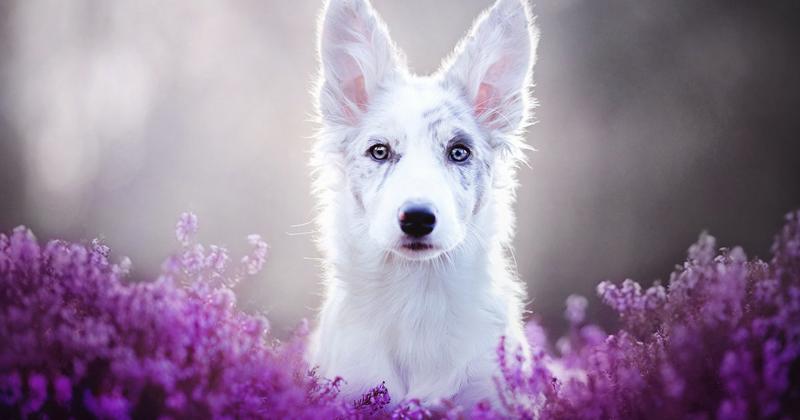 Польский фотограф делает самые красивые фотографии собак в мире (13фото)
