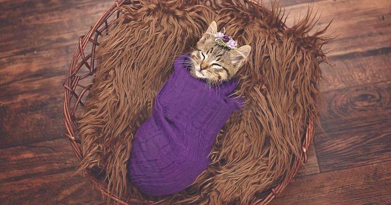 Девочка потребовала фотосессию для подобранного котенка, и мама не смогла отказать (7фото)