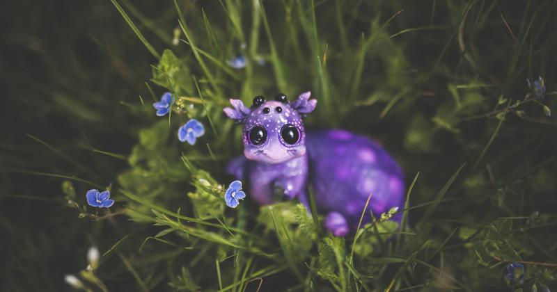 Сказочные виды животных, обнаруженные в саду (13фото)