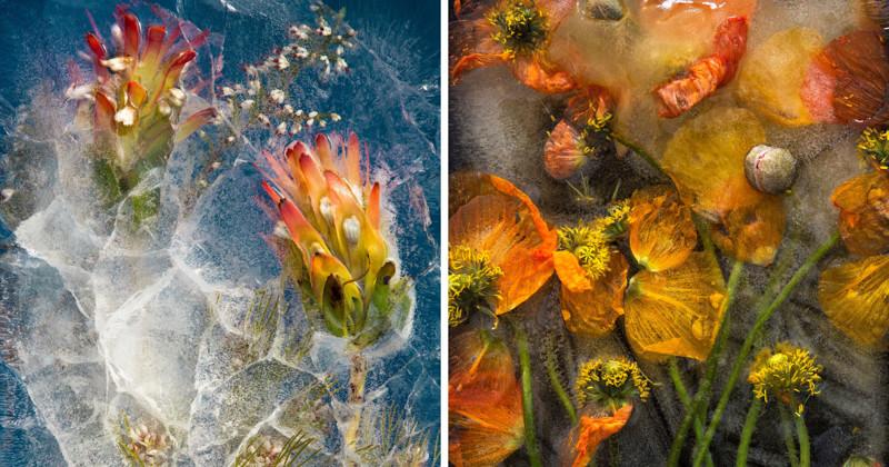 Завораживающая красота ледяных цветов (13фото)