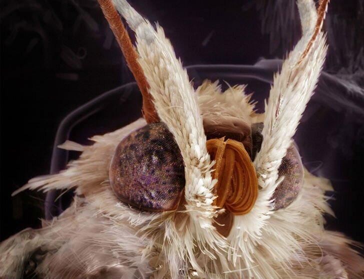 Удивительные портреты знакомых вам насекомых (9фото)