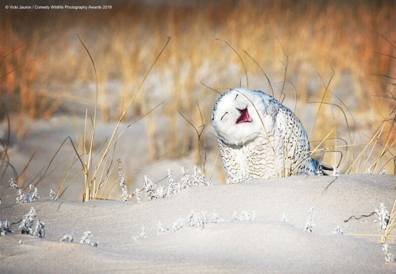 Снимки финалистов конкурса на самое смешное фото животных в дикой природе (10фото)