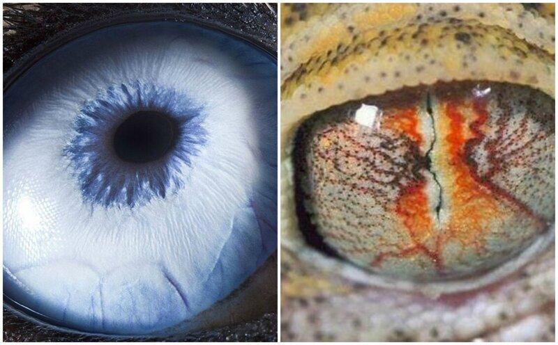 Завораживает: глаза животных в объективе фотографа (38фото)