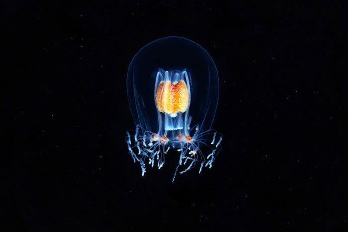 Невероятные фотографии «морских ангелов» и других существ, плавающих на глубине (65фото)