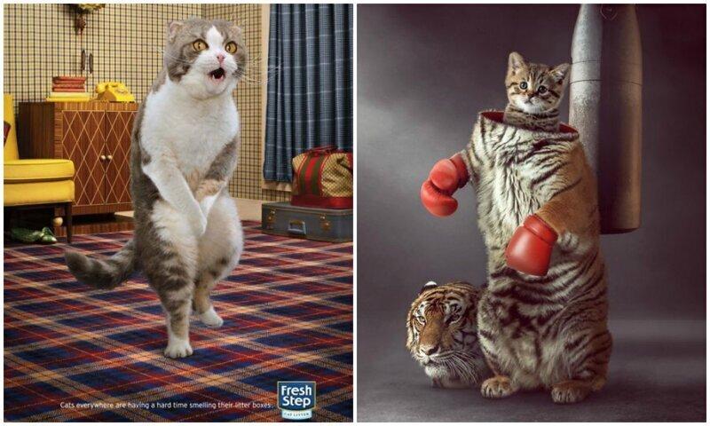 Самая креативная и забавная реклама с участием котиков (34фото)