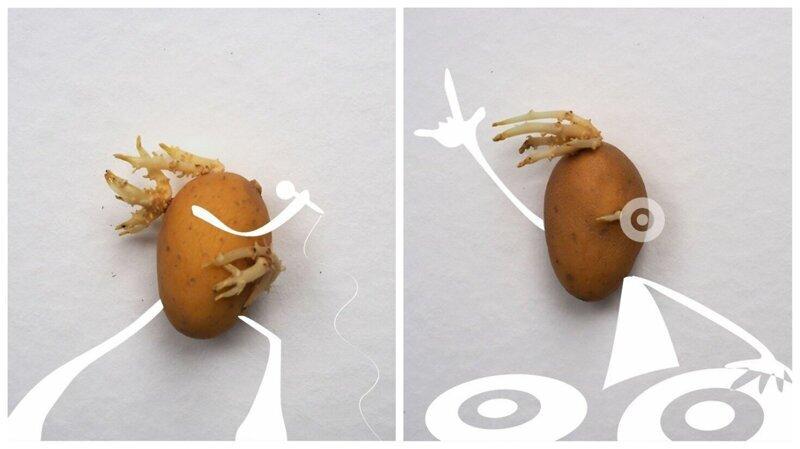 Иллюстратор на карантине подружился с проросшей картошкой (12фото)