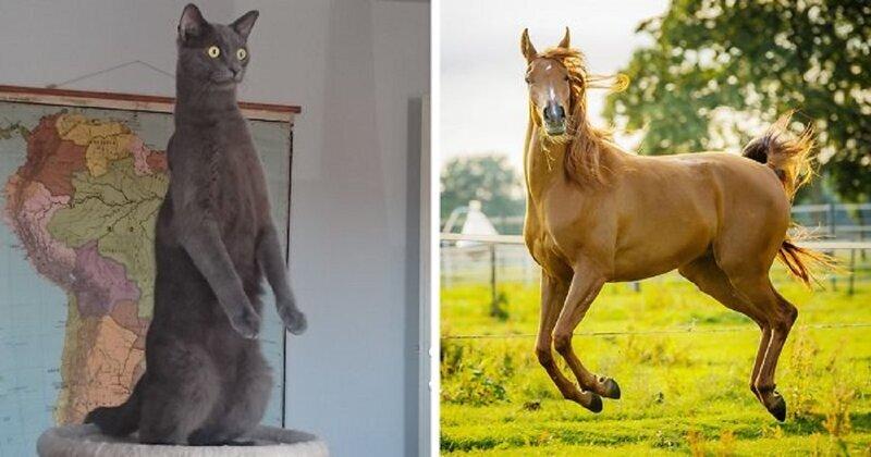 Лучшие смешные фотографии животных (21фото)