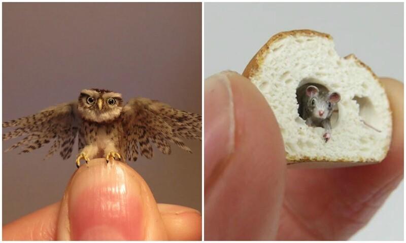 Художница создает невероятно реалистичные миниатюры животных (30фото)