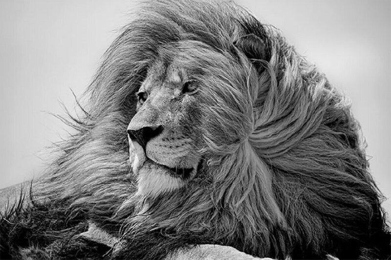 Названы победители конкурса черно-белой фотографии (20фото)