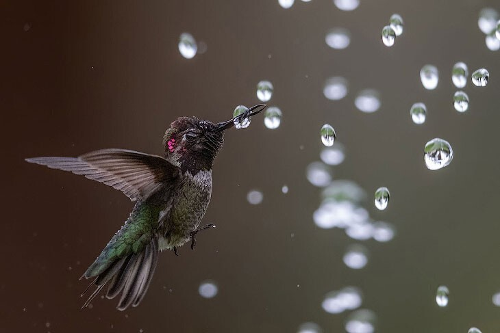 Птичий конкурс Audubon Photography Awards 2020 (29фото)