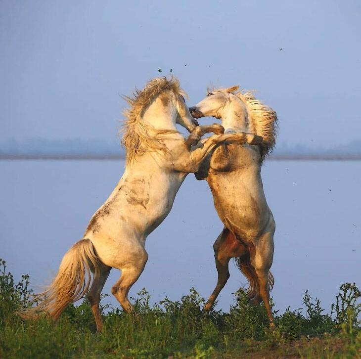 Животные в дикой природе (29фото)