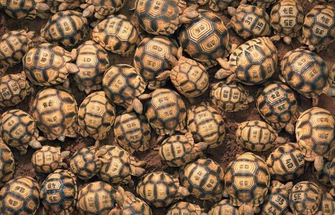 «Под угрозой исчезновения»: фотографии животных Тима Флача (13фото)