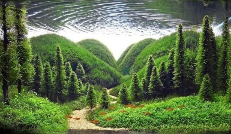 Искусство аквариумистики — удивительные подводные пейзажи (11фото)