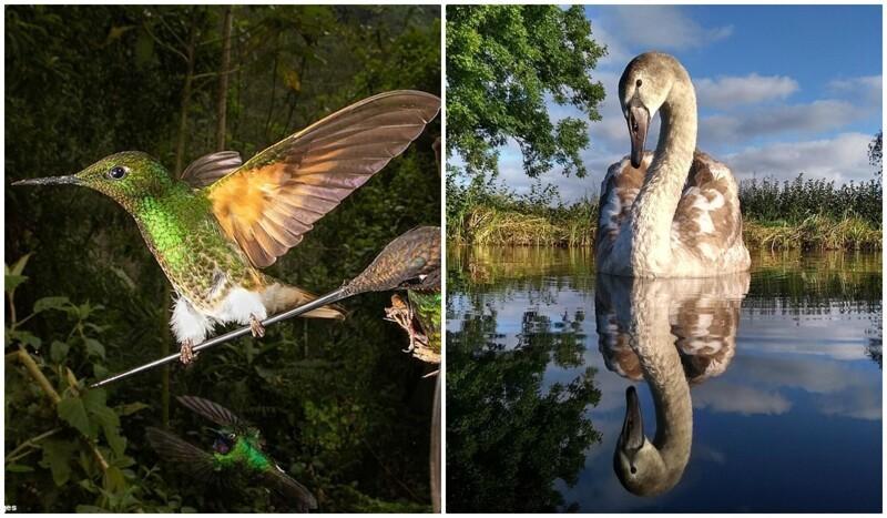 Лучшие фотографии птиц с конкурса Bird Photographer Of The Year 2020 (34фото)