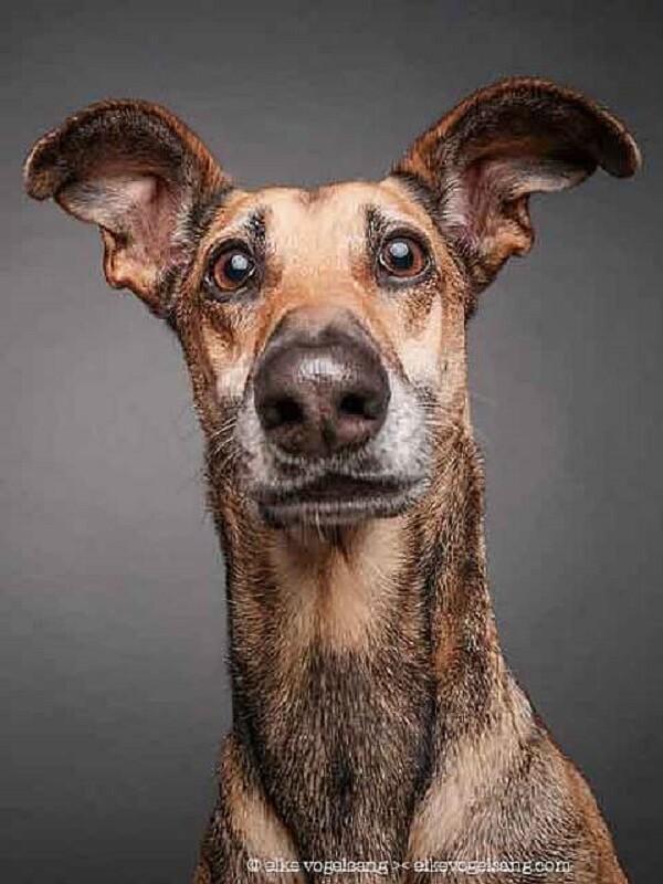 Эти выразительные собачьи морды (6фото)