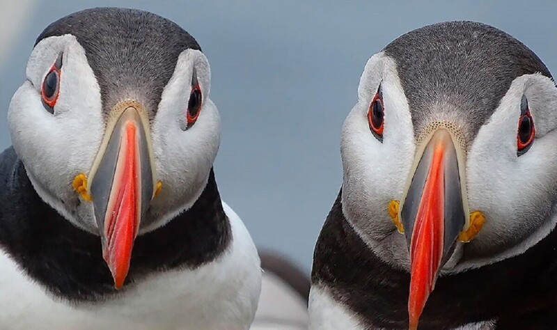 Конкурс Wildlife Photographer of the Year объявил победителей (17фото)