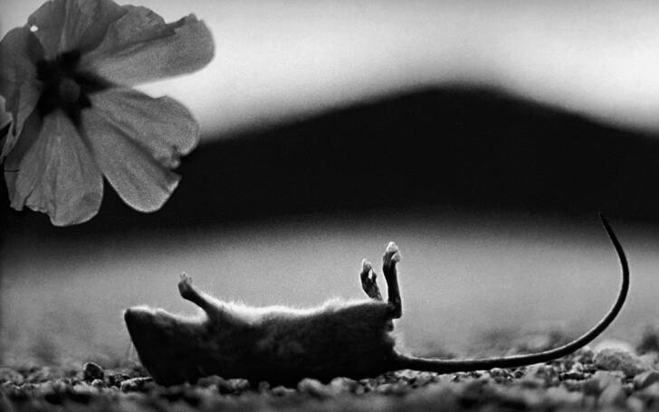 Психологический портрет: неожиданные образы животных (14фото)