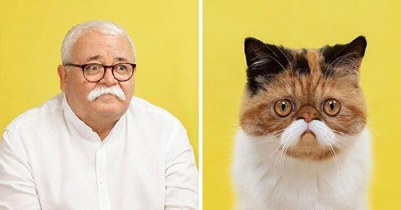 17 портретов кошек и людей, невероятно похожих друг на друга (18фото)