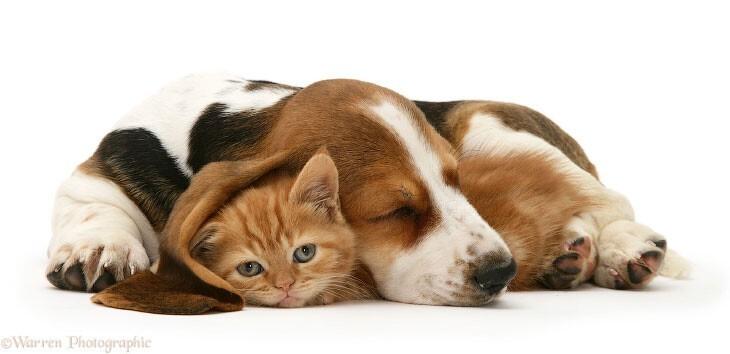 Как кошка с собакой (9фото)