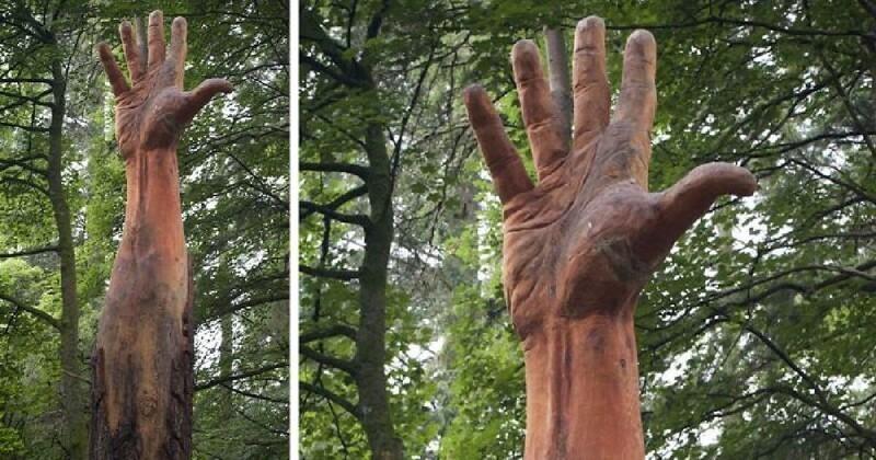 Поврежденное ураганом дерево превратилось в 15-метровую руку (7фото)