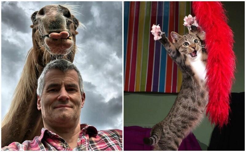 30 уморительных фото животных с конкурса Comedy Pet Photo Awards (31фото)