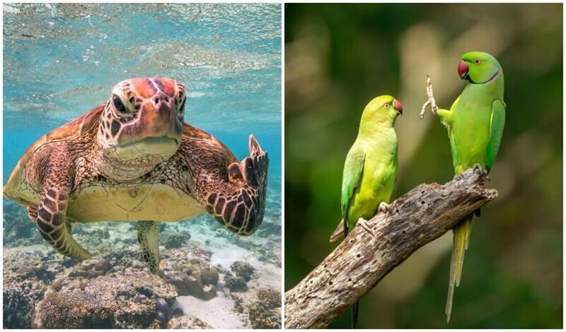 Уморительные фото животных с конкурса 2020 Comedy Wildlife Photography Awards (17фото)