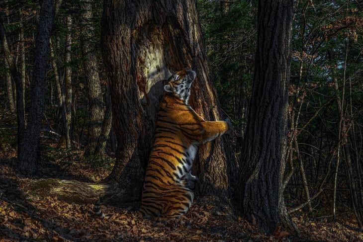 Подборка потрясающих фотографий-победителей со знаменитого конкурса дикой природы (19фото)