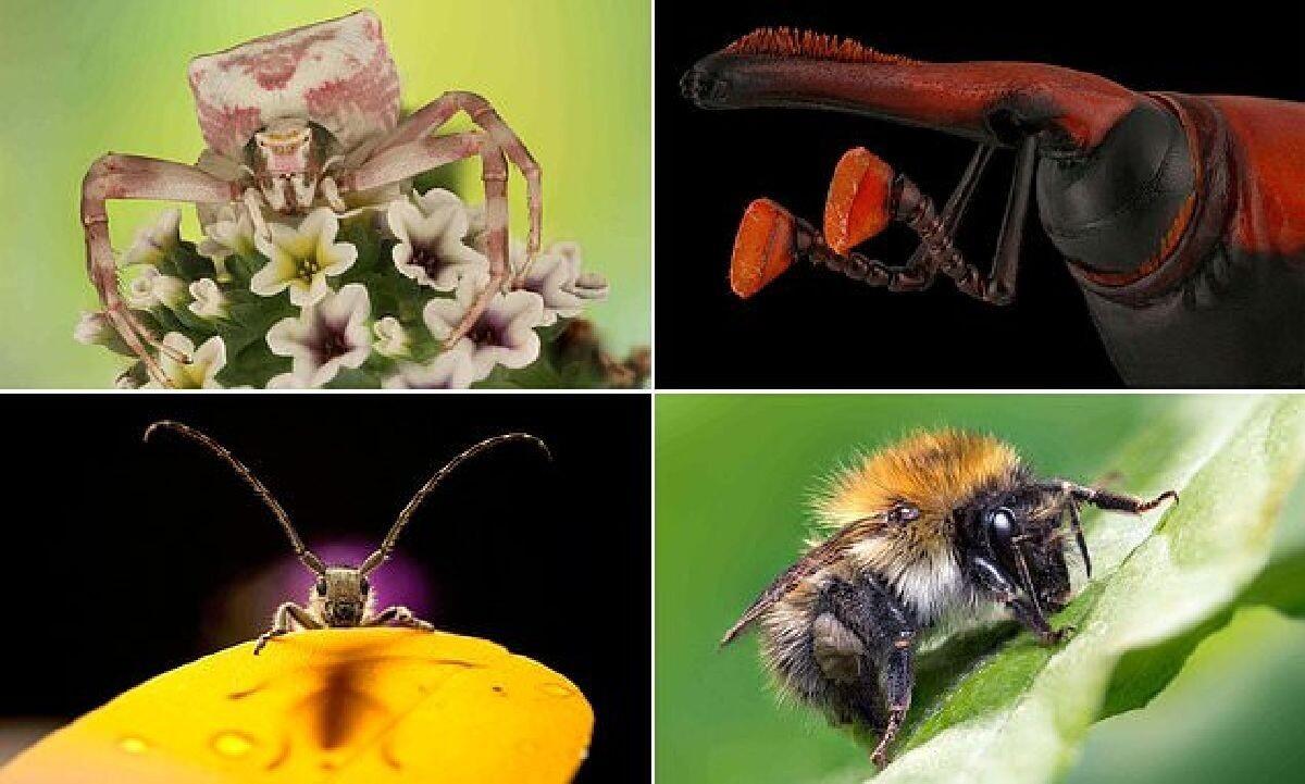 Насекомые крупным планом: победители конкурса Luminar Bug Photography Awards 2020 (21фото)